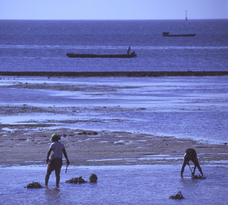 Boats wait offshore as workers break coral from the Dobo mudflats, and collect clams at the same time.