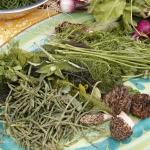 Foraged urban foodstuffs on a plate