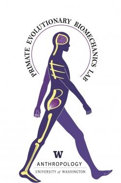 PEBL Logo