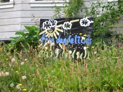 Sign saying Free Dandelions