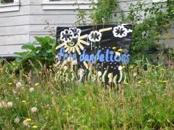 Sign saying Free Dandelions
